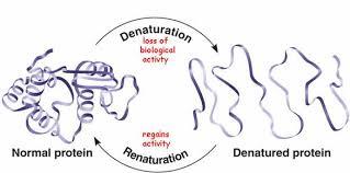 Denaturation And Coagulation Beef Stir Fry Crazy Food